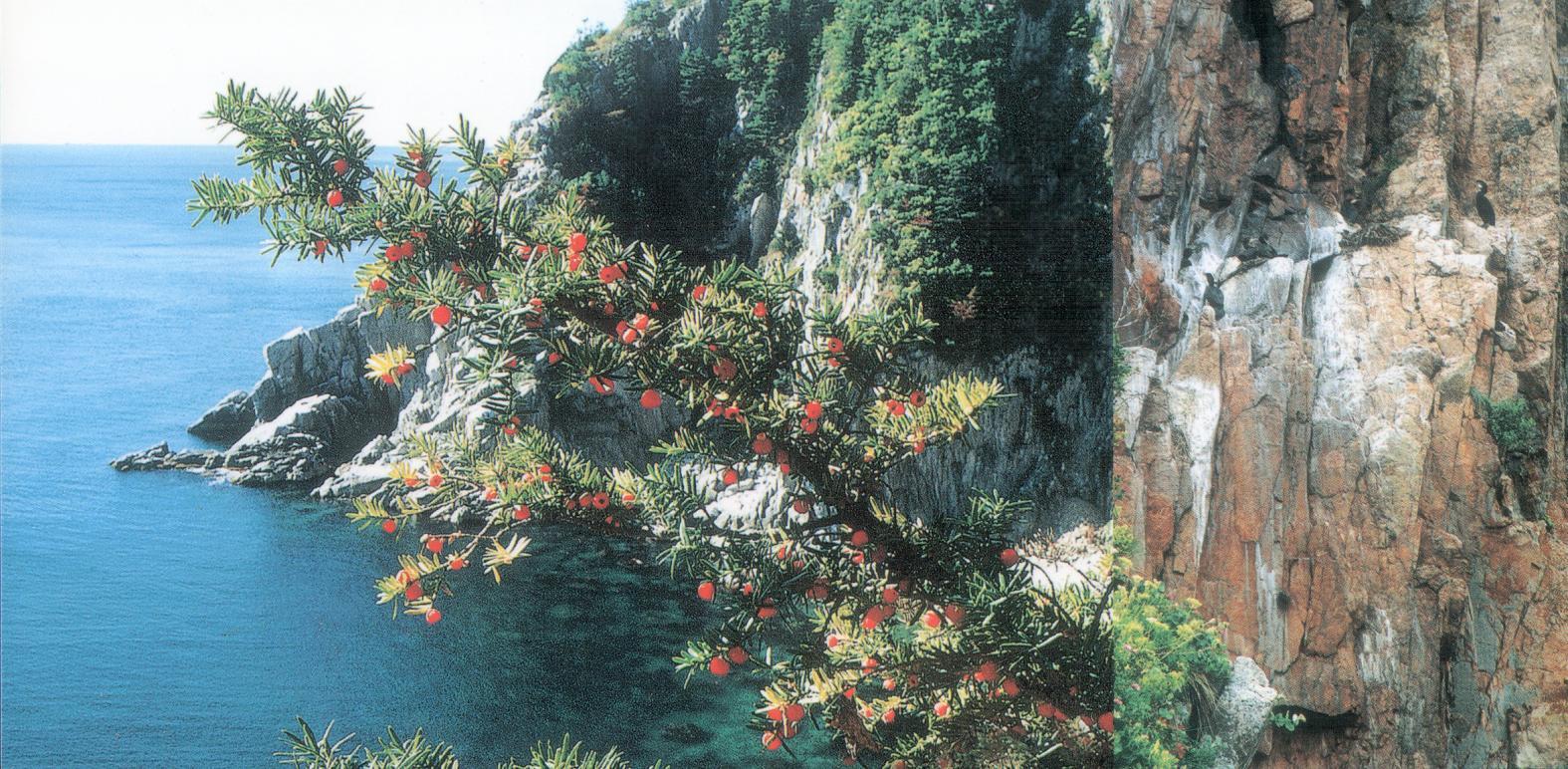 Рассказ об отдыхе на острове 9 фотография